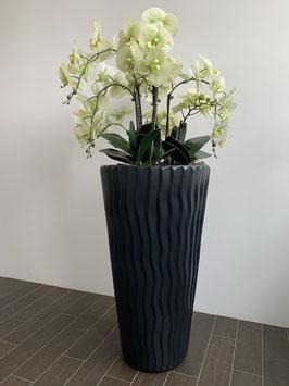 Sardegna Vertico (grüne Orchideen)