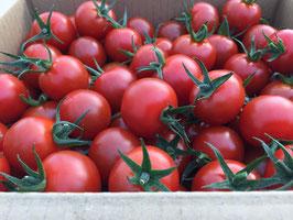 《 美トマト(赤) 》1kg