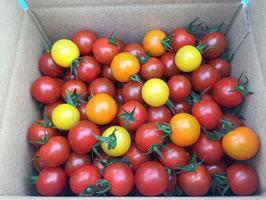 《 美トマト(3色) 》1kg