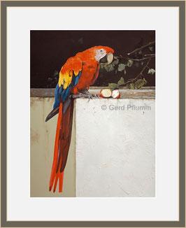 Papagei, Miniatur-Bild