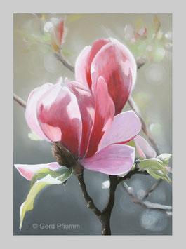 Magnolien No 3, Miniatur-Bild