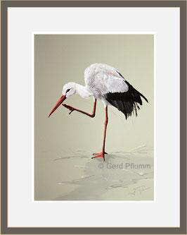 Storch, Miniatur-Bild
