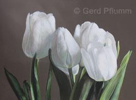 Tulpen No 16