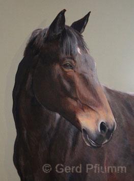 Pferd Ede