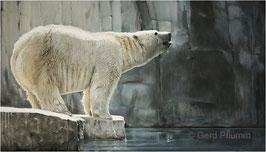 Eisbär No 2