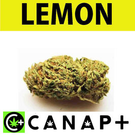 LEMON - CANAP+