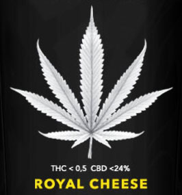 ROYAL CHEESE - Weedpassion