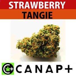 STRAWBERRY TANGIE - CANAP+