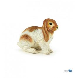 Conejo Carnero