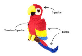 Papagei Paula