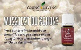 Sacred Frankincense - Heiliger Weihrauch 5 ml