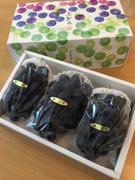 特選 藤稔 商品番号  B-F20A 極大粒の品種です。 果肉はやわらかく食べやすい品種です。