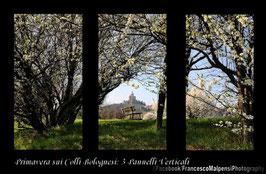 Primavera sui colli Bolognesi