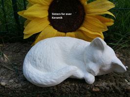 kleine Katze Finny eingerollt schlafend
