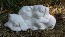 schlafender Welpenhaufen Motty, Mancy und Chia