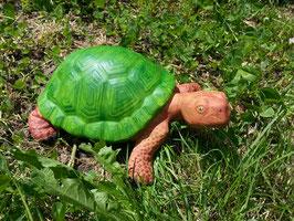 Schildkröte Pebbels