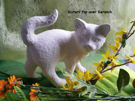 Katze Romeo