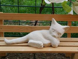 Katze Mimi liegend