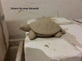 kleine Wasserschildkröte Momo (090)