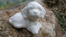 Minihund Püppi