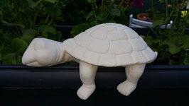 große Regalschildkröte Daria