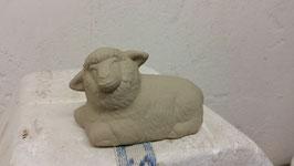 Schaf Jamy liegend