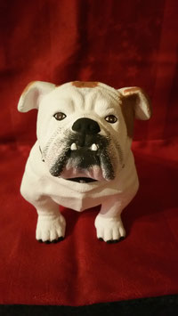 Bulldogge Bully
