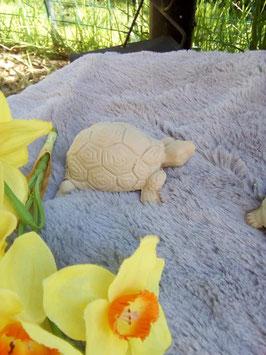 kleine Schildkröte Bux