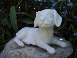 Titi der Beagle