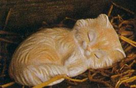 Perserkatze Tilly schlafend