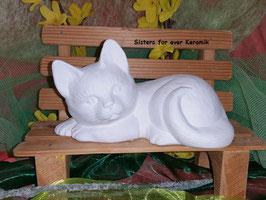 liegende Katze Bärle