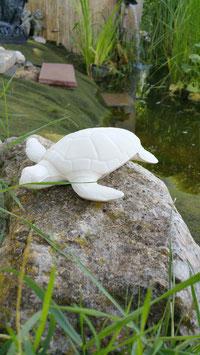 Schildkröte Rifferl