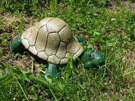 Schildkröte Cleopatra