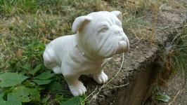 Bulldogge Bully