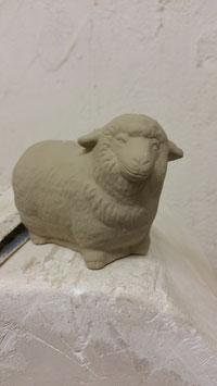 Schaf Kessy stehend