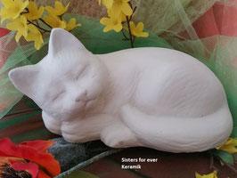 Katze Morle schlafend