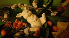Hase Flori auf Rücken liegend