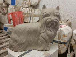 Yorkshire Terrier Paulchen