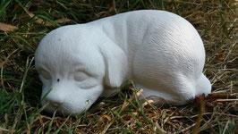 Hundewelpe liegend Abby