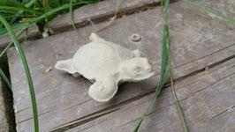 kleine Wasserschildkröte Littlefoot