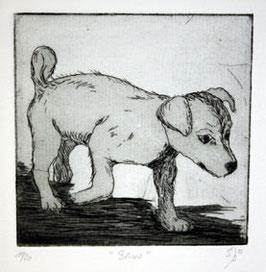 """Radierung Hund """"Benno"""" 11/20"""