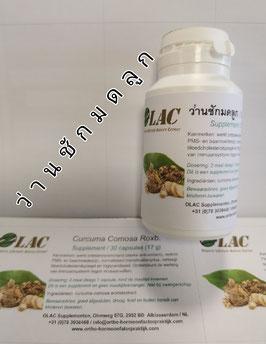 ว่านชักมดลูก / Curcuma Comosa Roxb.  (vegancapsules)