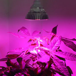Biogreen LED Pflanzenlampe SUPER GROW