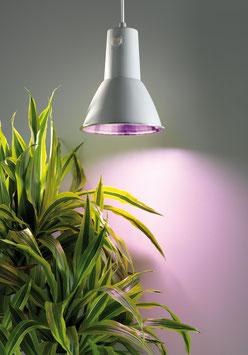 Energiespar Pflanzenleuchte L15