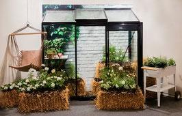 ACD Anlehngewächshaus Glas Miccolo 3