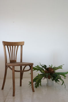 BENTWOOD CHAIR (SOLD)