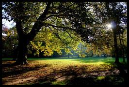 Leinwandbild, aus Wald und Flur, Motiv: 0001, in einem Rahmen mit Schattenfuge