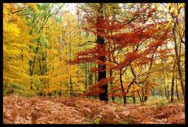 Leinwandbild, aus Wald und Flur, Motiv: 0528, in einem Rahmen mit Schattenfuge