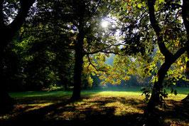 Leinwandbild, aus Wald und Flur, Motiv: 0007, auf einen Trägerrahmen gespannt