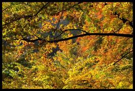 Leinwandbild, aus Wald und Flur, Motiv: 0394, in einem Rahmen mit Schattenfuge